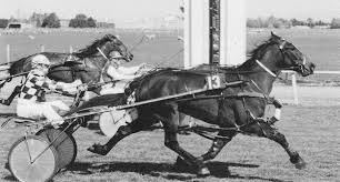 some dual gaited nz wonders part two harness bred