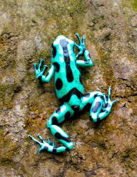 Fact Frog Meme - list of synonyms and antonyms of the word teal frog