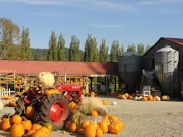 Best Pumpkin Patch Snohomish County by Celebrating Fall With Pumpkins At Fall City Farms Wildtalesof Com