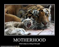 Mothers Day Funny Meme - funny pictures mom tiger does not sleep w630