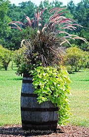 best 25 wine barrel planter ideas on pinterest wine barrel