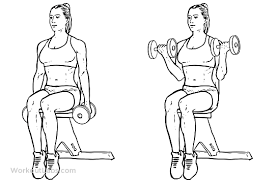 Flat Bench Dumbbell Seated Dumbbell Bicep Curls Workoutlabs