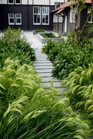 define native plant 36 best new zealand native garden designs images on pinterest
