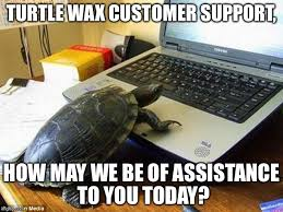 Laptop Meme - tortoise on laptop memes imgflip