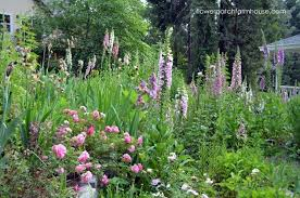foxglove an easy cottage garden flower hometalk