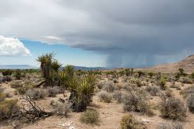 mojave desert native plants the absurdity of the cadiz water export scheme