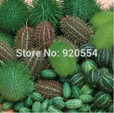 30pcs original pack cucumber cucumis ornamental cucumber seeds