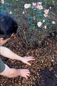 How To Mulch Flower Beds Mulches And Mulching Rhs Gardening