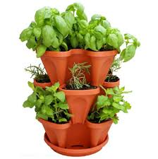 Herbs Indoors by Indoor Herb Garden Planter