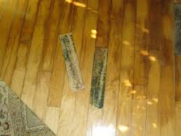what is mold how to identify black mold in palm fl