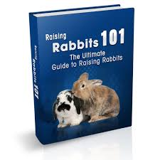 the rabbit book rabbit books find rabbit books for sale