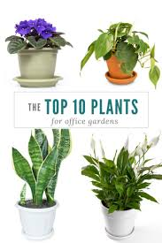 best 25 plants for office ideas on pinterest best plants for