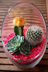 terrarium design astonishing large glass planter glass planters