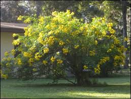 cassia gardening solutions of florida institute of
