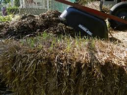 What Kind Of Mulch For Vegetable Garden by Hay Vs Straw In The Garden Which Is Better