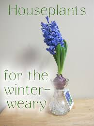 houseplants for the winter weary garden bloggers bloom day