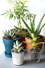 no sun plants indoor flowering plants no sunlight alexwomack me