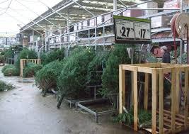 home depot fresh cut trees lizardmedia co