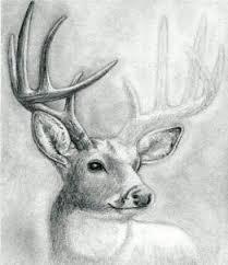how to draw a deer head buck dear head step by step realistic
