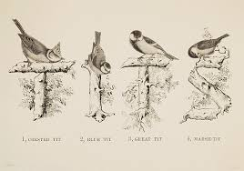letterology back to nature part 2