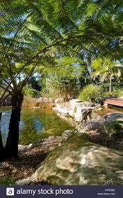 The Australian Botanic Garden Tree Ferns Australian Botanic Garden Mount Annan Near Sydney