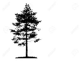 illustration with pine tree silhouette isolated on white