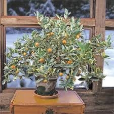 212 best citrus images on fruit agriculture and