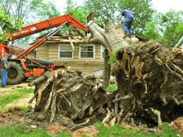top 10 best wylie tx tree services angie s list