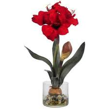 christmas plants u0026 flowers indoor christmas decorations the
