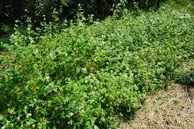 building healthy soils in vegetable gardens cover crops have got