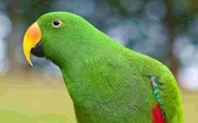 green parrot wallpaper birds nature wallpaper collection