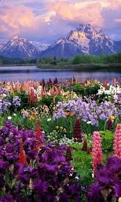 Wyoming nature activities images Best 25 wyoming mountains ideas grand teton jpg