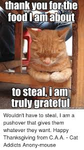 Thanksgiving Cat Meme - thank you forthe food lam about to steal i am truly grateful wouldn