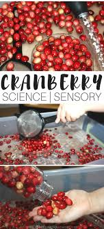 cranberry science thanksgiving activities motor play