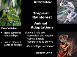 Adaptations Of Tropical Rainforest Plants - what is a biome scientists have developed the term biome to