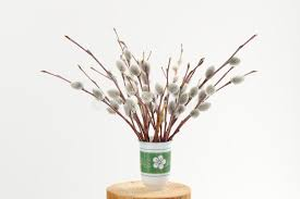 Vase With Twigs Bunch Of Willow Twigs In Green Vase On White Background Stock