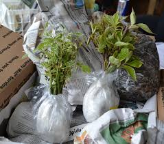 how to ship plants by u s mail ups or fed ex