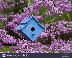 colorful springtime garden close up blue birdhouse for nesting