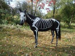 horses dressed for halloween pictures to pin on pinterest pinsdaddy