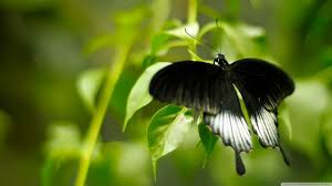 what does a white butterfly the best butterfly of 2018