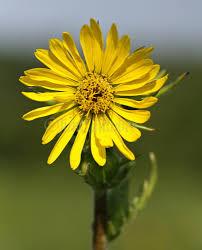 plants native to wisconsin wisconsin native wildflowers archives window to wildlife