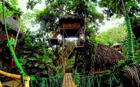 famous tree houses famous dominican tree house village best house design wood is