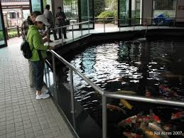 Indoor Pond by Fall Japan Trip 2007