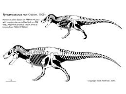 theropod skeletal reconstructionsscott hartman u0027s skeletal drawing com