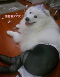 Pantyhose Meme - dogs wearing pantyhose meme 15 dump a day