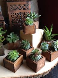 50 stunning ideas diy succulents for indoor decorations plants