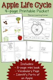 life cycle of an apple tree worksheet free worksheets library