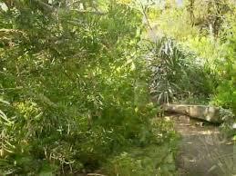 Wpa Rock Garden Wpa Rock Garden