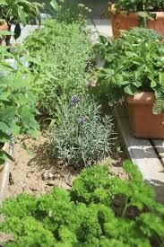 Countertop Herb Garden by Best 20 Italian Herb Garden Italian Herb Garden Plan