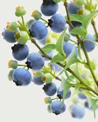 Best Fruit Trees For North Carolina - 66 best gardening in nc images on pinterest north carolina